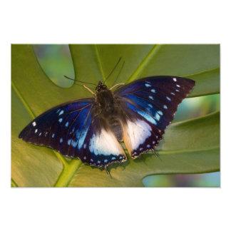 Sammamish, Washington. Mariposas tropicales 32 Impresiones Fotograficas