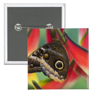 Sammamish, Washington. Mariposas tropicales 32 Pin Cuadrada 5 Cm