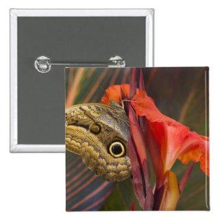 Sammamish, Washington. Mariposas tropicales 34 Pin Cuadrada 5 Cm