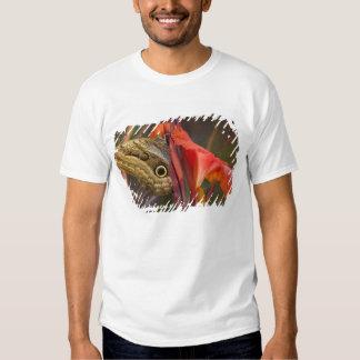 Sammamish, Washington. Mariposas tropicales 34 Playeras