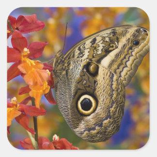Sammamish, Washington. Mariposas tropicales 35 Pegatina Cuadrada