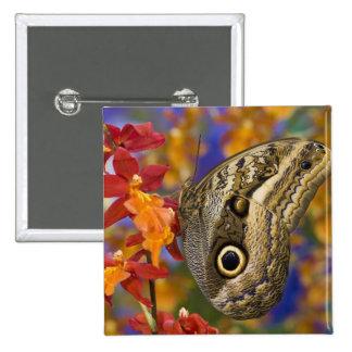 Sammamish, Washington. Mariposas tropicales 35 Pin Cuadrada 5 Cm