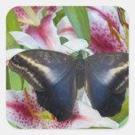 Sammamish, Washington. Mariposas tropicales 36 Colcomanias Cuadradas