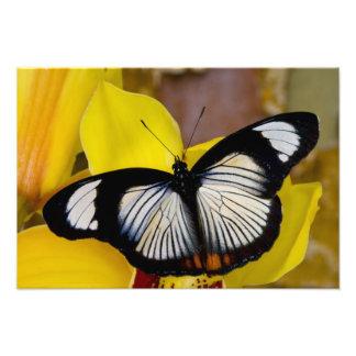 Sammamish, Washington. Mariposas tropicales 37 Fotografías