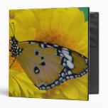 Sammamish, Washington. Mariposas tropicales 38