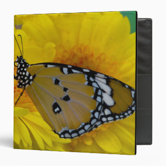 Sammamish Washington Mariposas tropicales 38