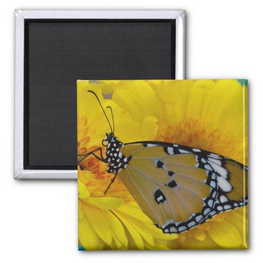 Sammamish, Washington. Mariposas tropicales 38 Imán Cuadrado