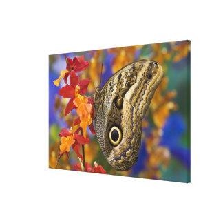 Sammamish, Washington. Mariposas tropicales 39 Lona Envuelta Para Galerías