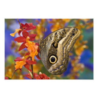 Sammamish, Washington. Mariposas tropicales 39 Cojinete