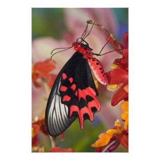 Sammamish, Washington. Mariposas tropicales 3 Fotografías