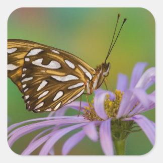 Sammamish, Washington. Mariposas tropicales 40 Pegatina Cuadrada