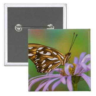 Sammamish, Washington. Mariposas tropicales 40 Pin Cuadrada 5 Cm