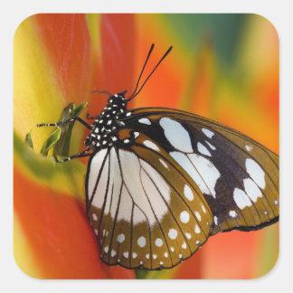 Sammamish, Washington. Mariposas tropicales 42 Pegatina Cuadrada