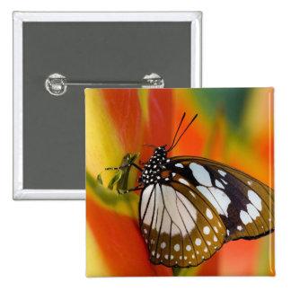 Sammamish, Washington. Mariposas tropicales 42 Pin Cuadrada 5 Cm