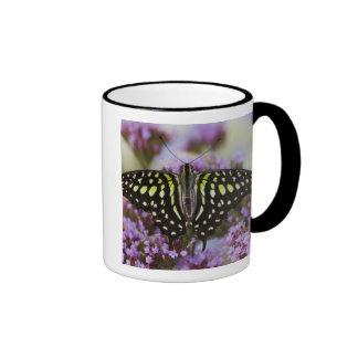 Sammamish, Washington. Mariposas tropicales 43 Taza De Dos Colores