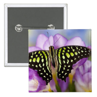 Sammamish, Washington. Mariposas tropicales 44 Pin