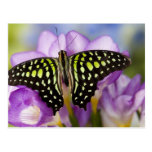 Sammamish, Washington. Mariposas tropicales 44 Tarjetas Postales