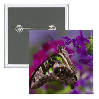 Sammamish, Washington. Mariposas tropicales 45 Pin Cuadrada 5 Cm