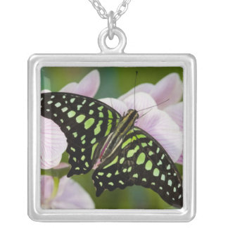 Sammamish, Washington. Mariposas tropicales 46 Collar Plateado