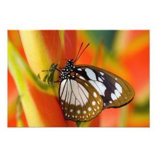 Sammamish, Washington. Mariposas tropicales 46 Fotografía