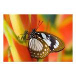 Sammamish, Washington. Mariposas tropicales 46 Arte Fotográfico