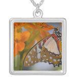 Sammamish, Washington. Mariposas tropicales 47 Colgante Cuadrado