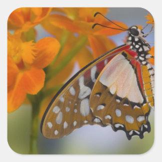 Sammamish, Washington. Mariposas tropicales 47 Pegatina Cuadrada