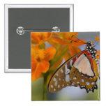 Sammamish, Washington. Mariposas tropicales 47 Pin Cuadrada 5 Cm