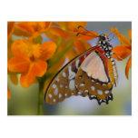 Sammamish, Washington. Mariposas tropicales 47 Tarjetas Postales