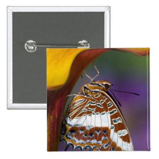 Sammamish, Washington. Mariposas tropicales 4 Pin Cuadrada 5 Cm
