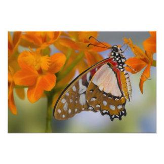 Sammamish, Washington. Mariposas tropicales 51 Fotografías