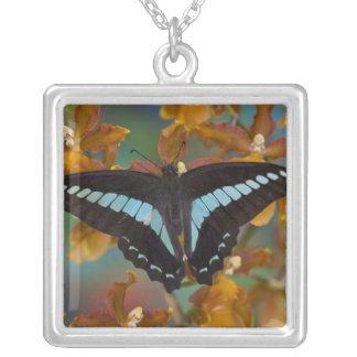 Sammamish, Washington. Mariposas tropicales 52 Collar Plateado
