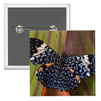 Sammamish, Washington. Mariposas tropicales 54 Pin Cuadrado