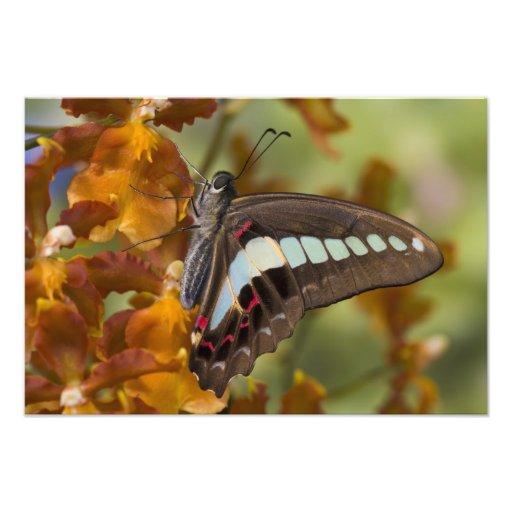 Sammamish, Washington. Mariposas tropicales 55 Fotografía