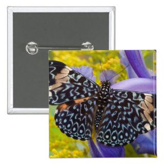 Sammamish, Washington. Mariposas tropicales 55 Pin Cuadrada 5 Cm