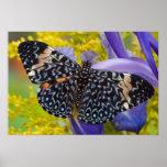 Sammamish, Washington. Mariposas tropicales 55 Póster