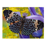 Sammamish, Washington. Mariposas tropicales 55 Postal