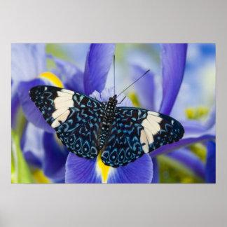 Sammamish Washington Mariposas tropicales 56 Poster