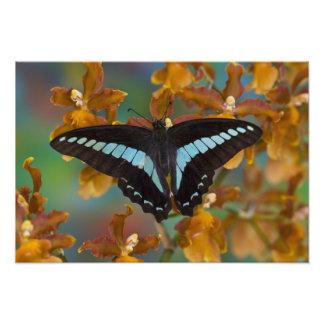 Sammamish, Washington. Mariposas tropicales 56 Fotografías