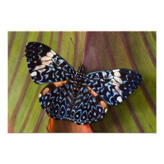 Sammamish, Washington. Mariposas tropicales 58 Impresiones Fotográficas