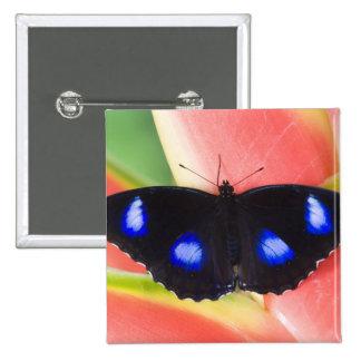 Sammamish, Washington. Mariposas tropicales 58 Pin Cuadrada 5 Cm
