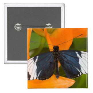 Sammamish, Washington. Mariposas tropicales 59 Pin Cuadrada 5 Cm