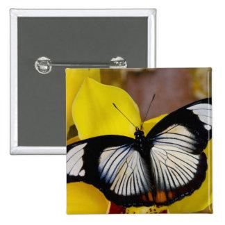 Sammamish, Washington. Mariposas tropicales 62 Pin Cuadrada 5 Cm