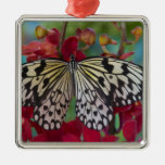 Sammamish, Washington. Mariposas tropicales 63 Ornatos