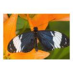 Sammamish, Washington. Mariposas tropicales 63 Fotografía