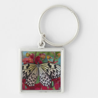 Sammamish, Washington. Mariposas tropicales 63 Llavero Cuadrado Plateado