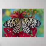 Sammamish, Washington. Mariposas tropicales 63 Posters