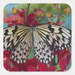 Sammamish, Washington. Mariposas tropicales 63 Calcomania Cuadradas Personalizadas