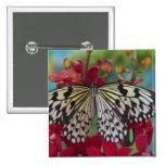 Sammamish, Washington. Mariposas tropicales 63 Pin Cuadrado