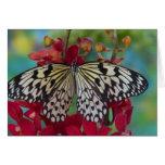 Sammamish, Washington. Mariposas tropicales 63 Tarjeta De Felicitación